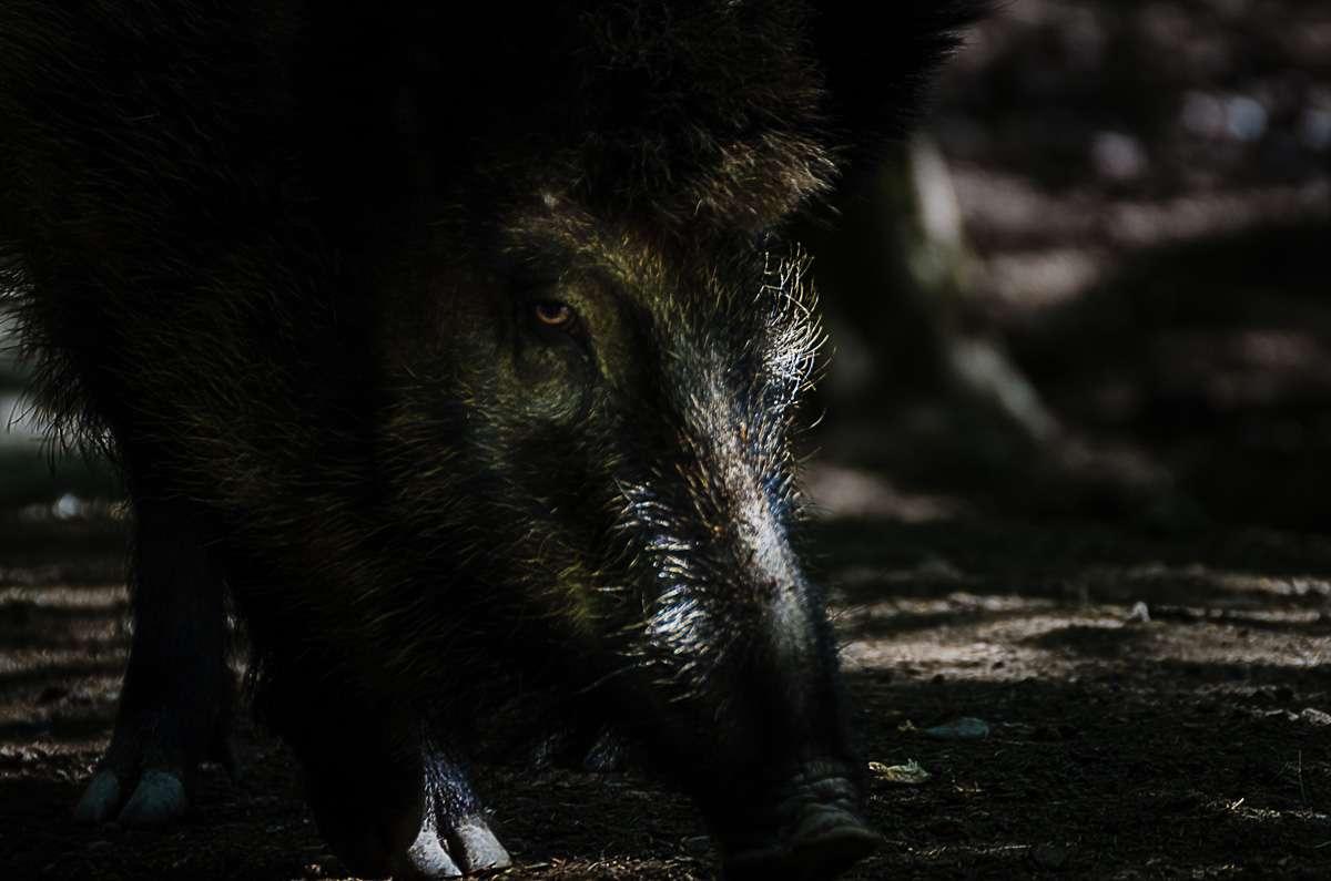 Da haben wir auf dem Rückweg Schwein gehabt.