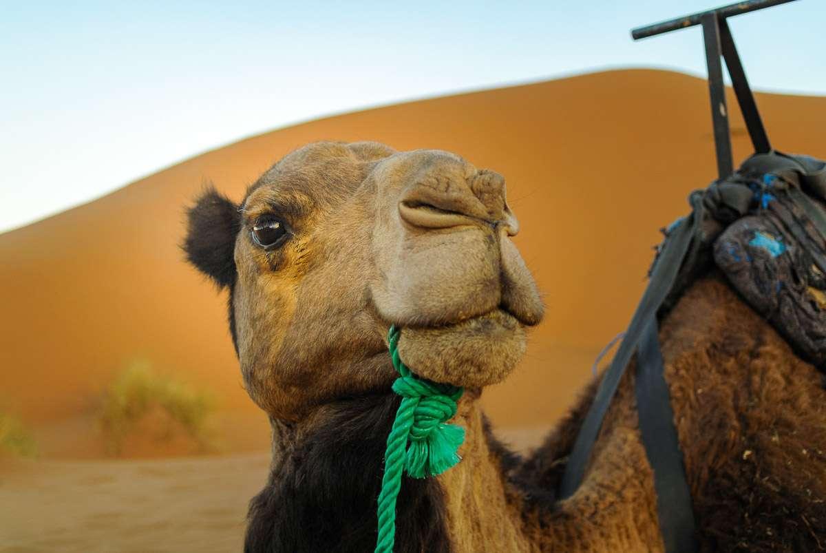 Guten Morgen Jimmy - mein Kamel hat auch schon ausgeschlafen