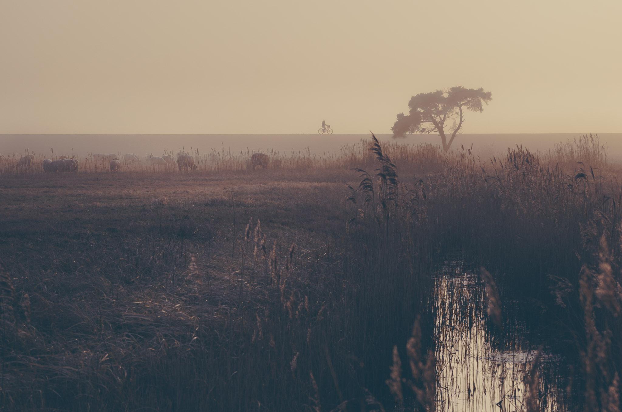 Nebel auf dem Darss