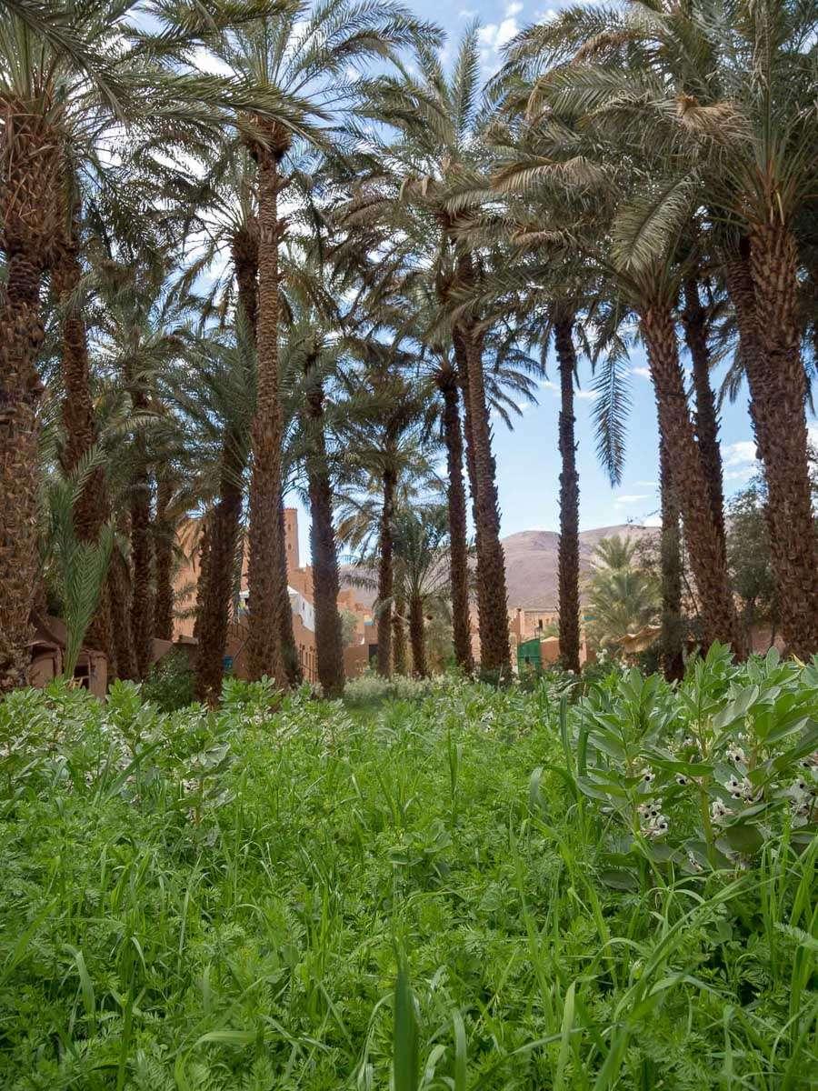 Oase in Marokko - der Garten von Elatmani