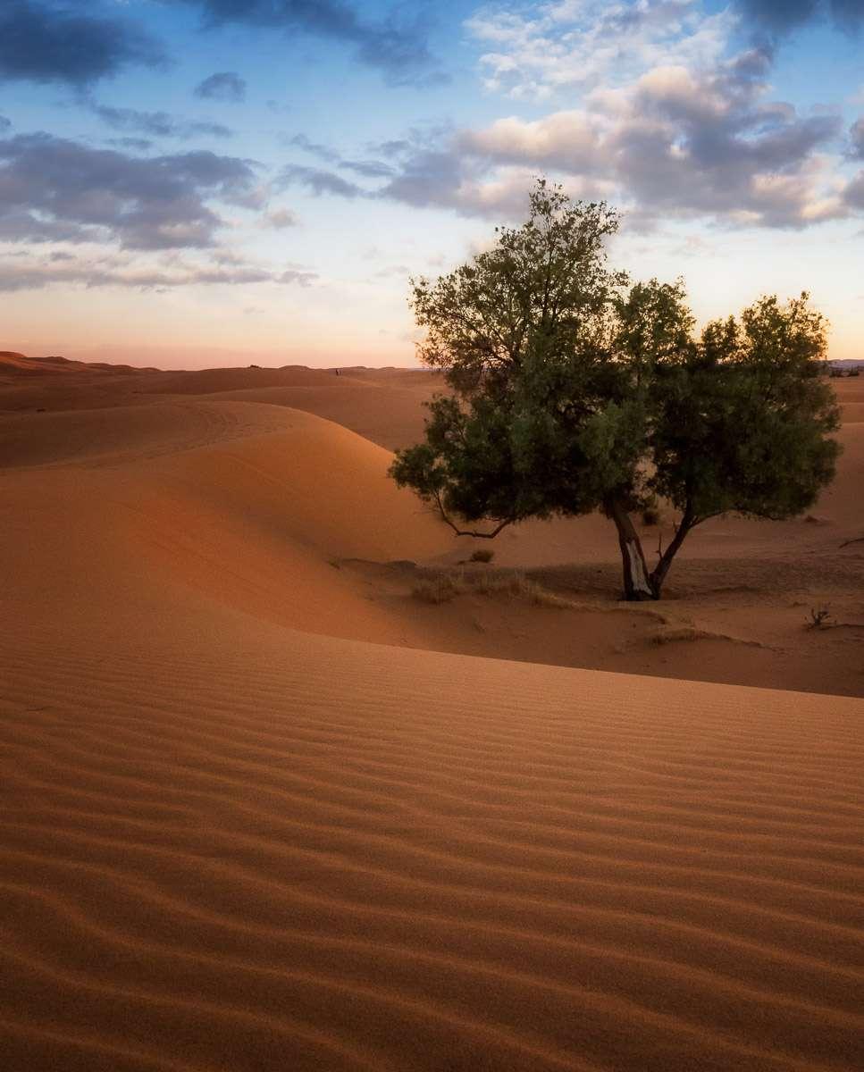 Baum in der Wüste zum Sonnenuntergang