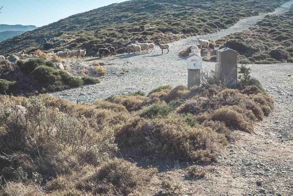zweitgrößte-insel-griechenlands-euböa-ahoi-adventures-wanderung-mühle