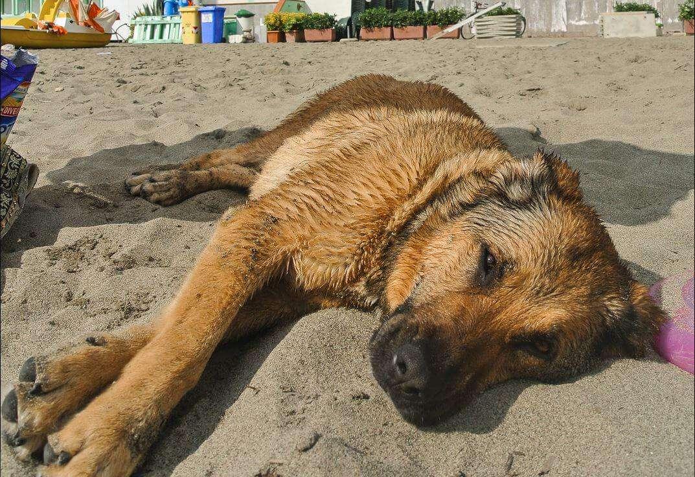 nasser hund am strand