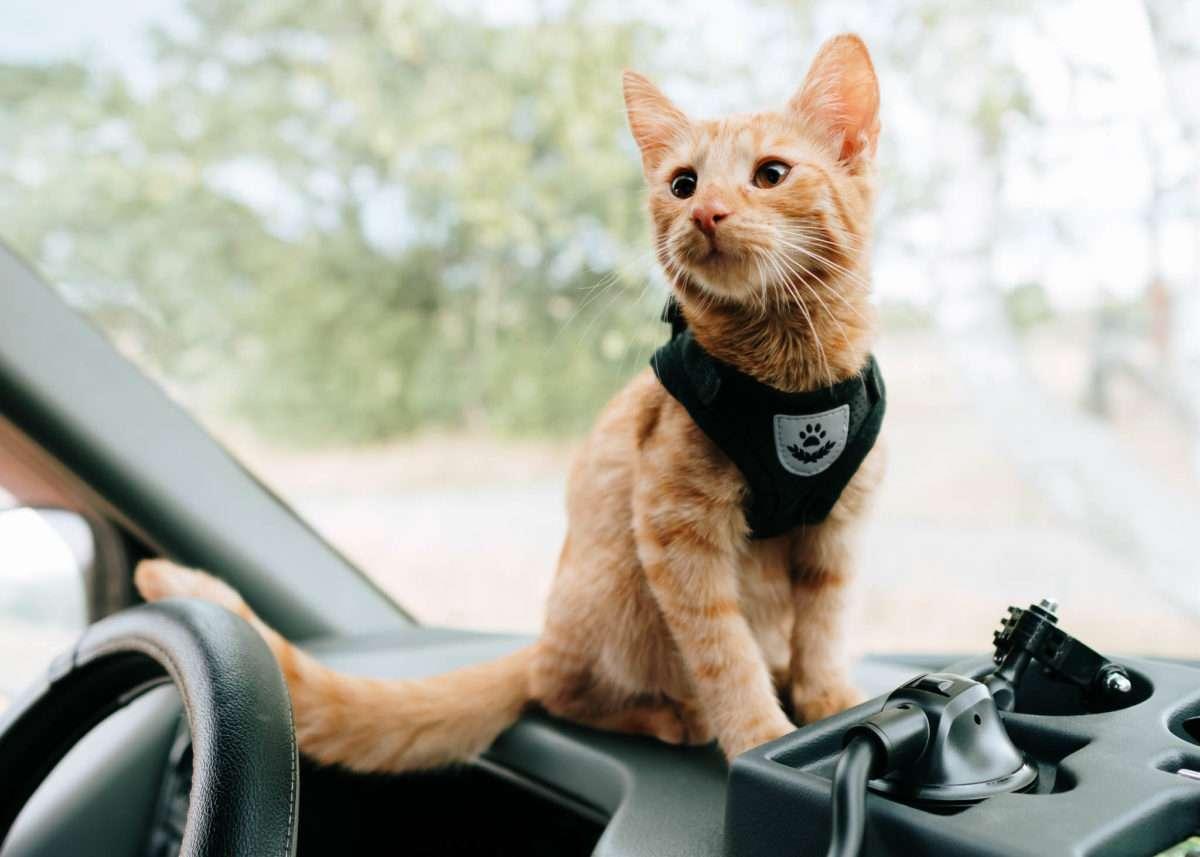 Campen Mit Katzen