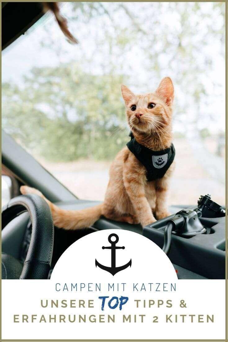 Campen Mit Katzen - Pinne es auf Pinterest