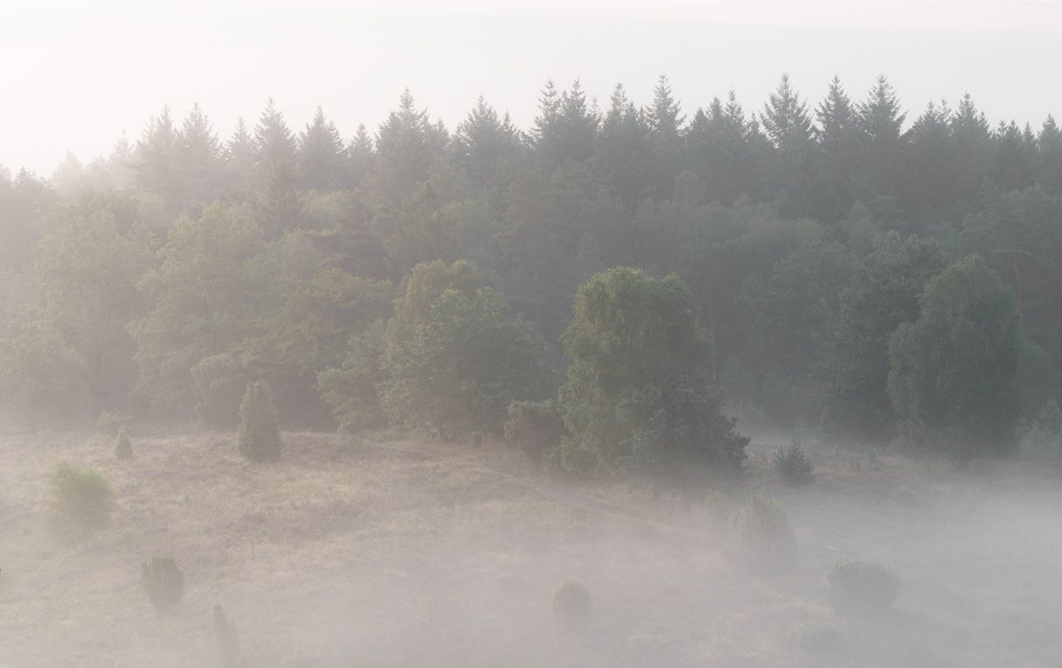 Totengrund Lüneburger Heide