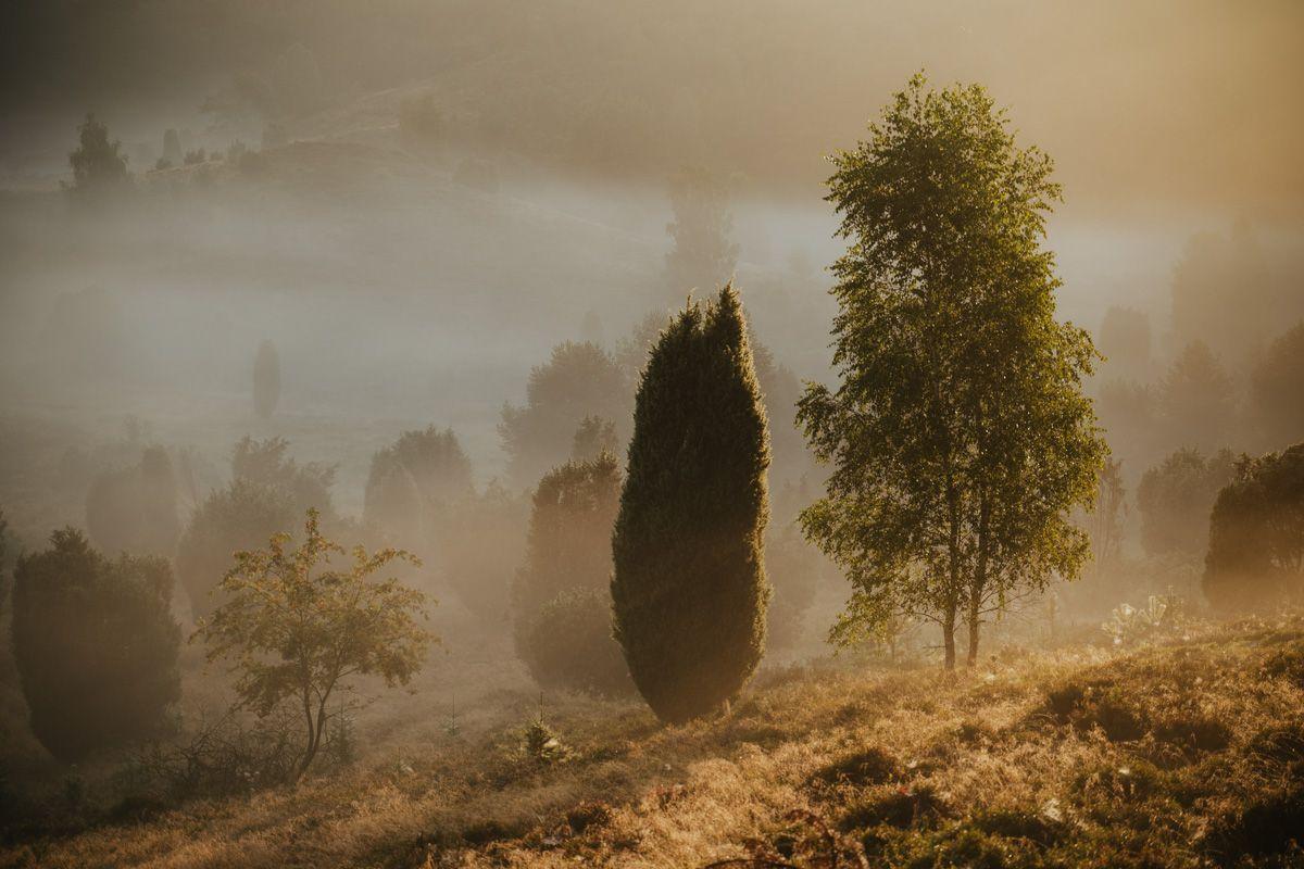 Totengrund Lüneburger Heide bei Nebel