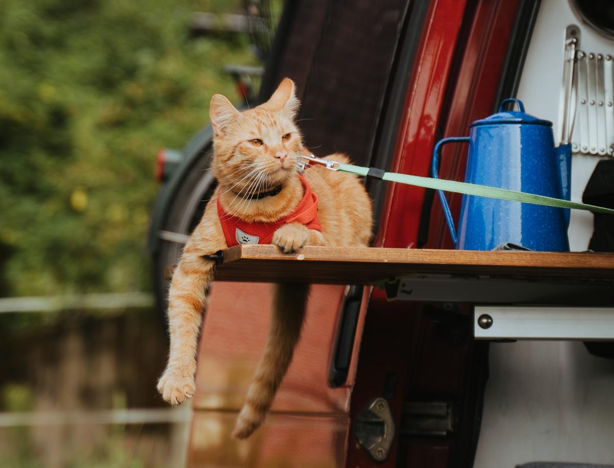 Katze entspannt im Camper