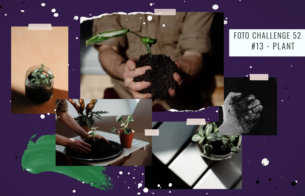 foto-challenge-52-plant