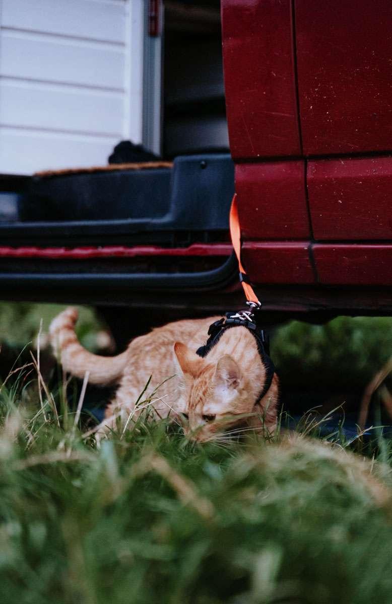 Roadtrip mit Katzen